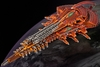 Shaltari Diamond / Platinum Battleship
